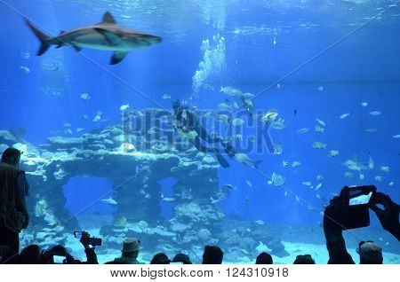 attraction diver feeding sharks in the Oceanarium in Eilat