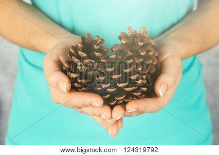 Few pine cones in woman hands, closeup