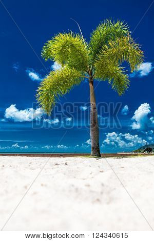 A lone coconut tree on a tropical beach with a blue sky, Cairns Esplanade, Australia