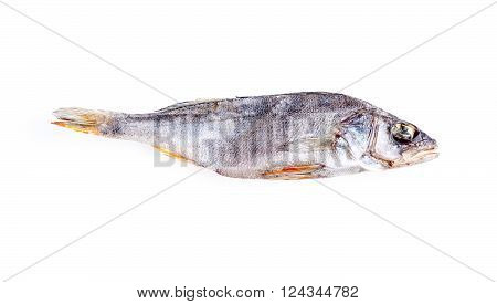 dried fish closeup isolated on a white background