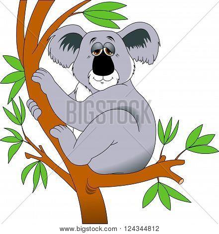 gray koala sleeps sitting on a tree branch vector