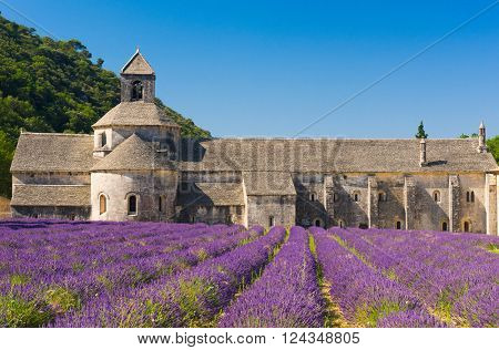 Cistercian Abbey of Senanque and blooming rows of lavender. Gordes, Vaucluse, Provence - France