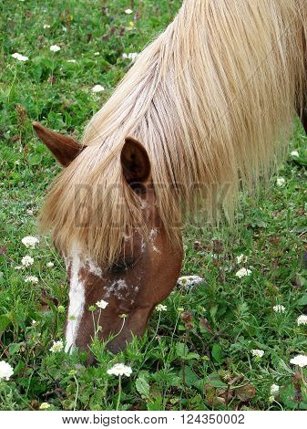 The horse with a light mane eats a grass and flowers