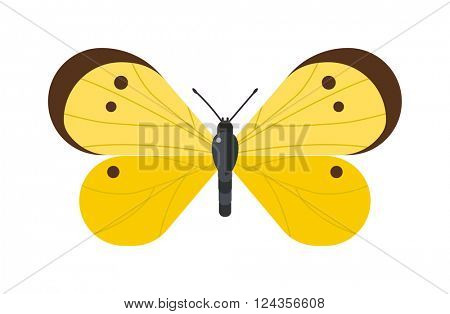 Flat butterfly vector isolated on white background