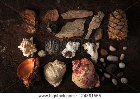 Sea shells with coral and stone on the dark background