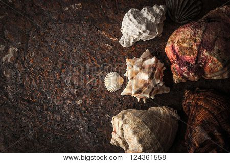 Sea shells on the dark stone background