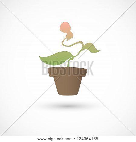 Vector illustration of a baby plant on white bg