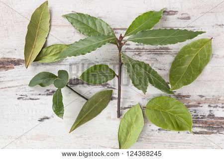 Bay leaves on white wooden background. Bay leaves culinary and medical herbs on white wooden table top view.
