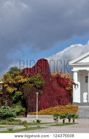 Bright autumnal plants are in the park near white Dorian portico of building in sunlight. ** Note: Soft Focus at 100%, best at smaller sizes