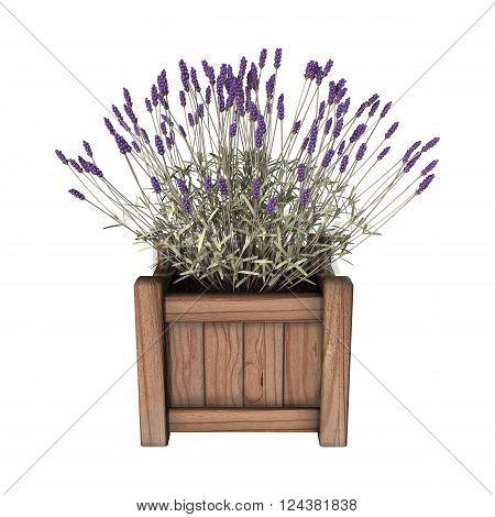 3D Illustration Lavender Planter On White