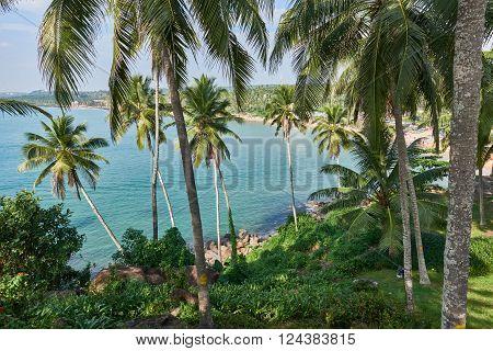 View of the blue ocean thrugh verdant grove of coconut trees