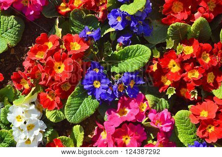 A Lovely Bunch of Flowers with Enchanting Colors