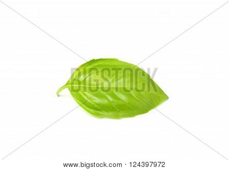 Fresh leaf of Basil close-up.Isolated on a white background.