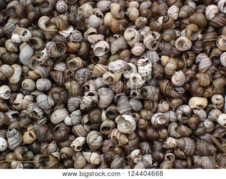 Striped shells, river shells,curly shells,freshwater snail shells