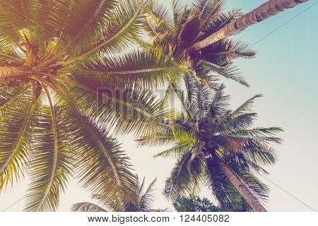 Coconut palm tree on beach with vintage effect.