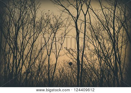 Sun rise seen through the dry trees