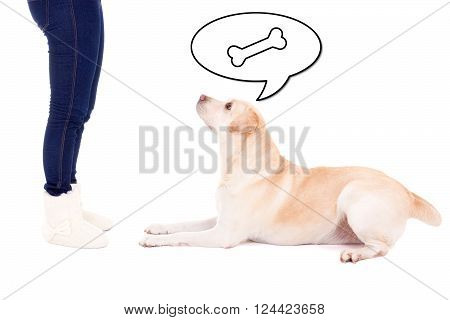 lying dog thinking about food and female legs isolated on white background