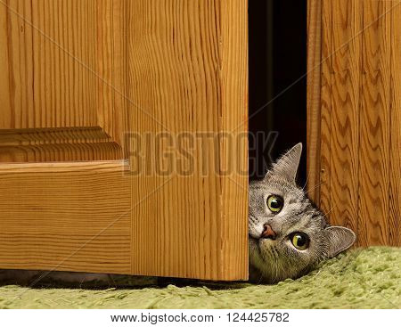 Sad cat looking to the right between doors, sad grey cat, green eyes cat, sad kitten