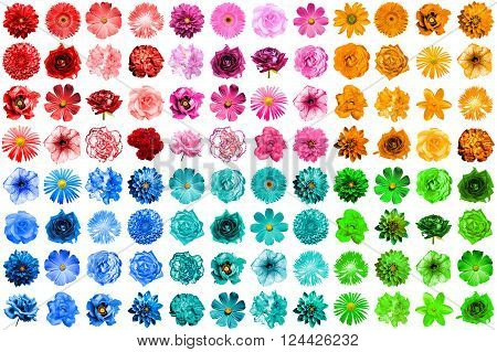 Mega pack of 96 in 1 natural and surreal blue, orange, red, green, turquoise and pink flowers isolated on white
