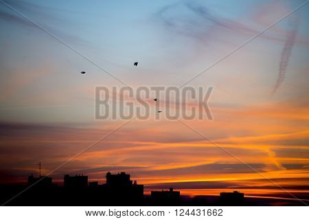 Silhouettes Sunset in the City with blue skym clouds and birds