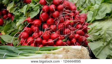 Fresh radishes and organic scallion in spring ** Note: Soft Focus at 100%, best at smaller sizes
