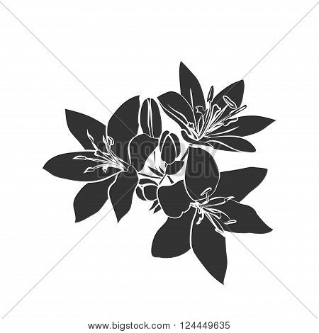 Silhouette Lily. Black outline on white background. Vector illustration.