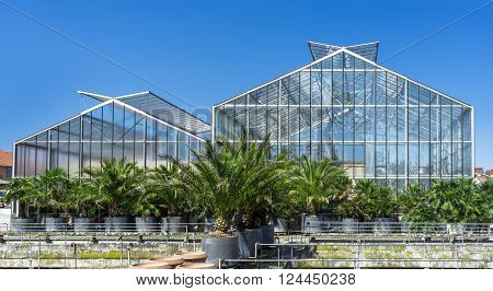 Implanted palm trees in planters standing outdoors in front of two greenhouses