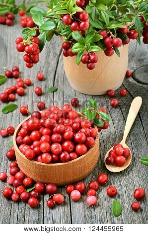 Cowberry in wooden bowl on rustic table