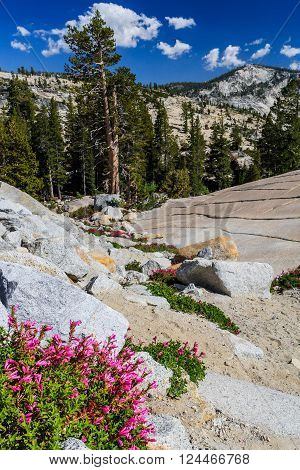Tioga Pass is a mountain pass in the Sierra Nevada mountains. State Route 120 runs through it, and serves as the eastern entry point for Yosemite National Park, at the Tioga Pass Entrance Station.