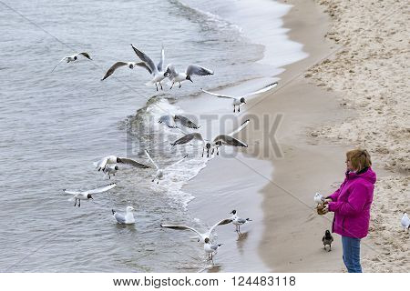 Woman Loves To Feed The Seagulls At The Baltic Sea