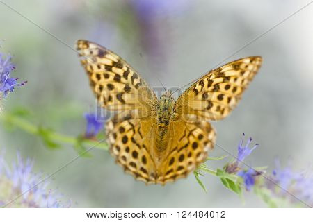 a black spotted orange heliconian butterfly in nature