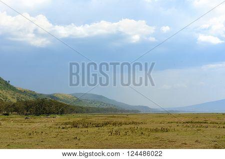 Savannah Landscape In The National Park Of Kenya