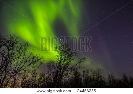 Bright Northern lights in  sky over trees
