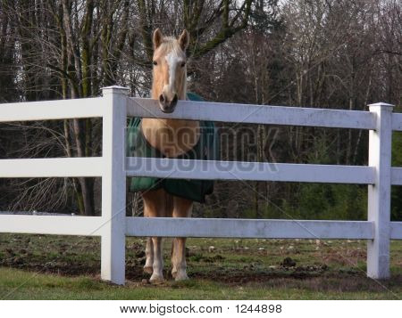 Horse On The Farm