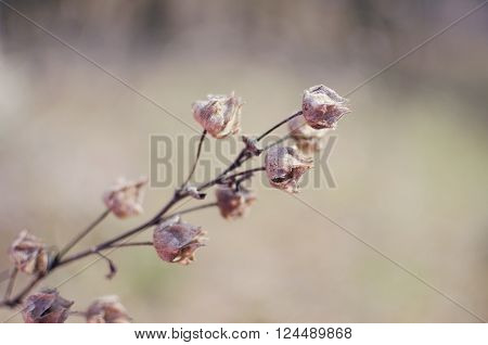 Dry wild flowers for the background in a pale violet color. Dry plants autumnal meadow. Beautiful nature wallpaper for desktop for women. Vintage style and soft focus.