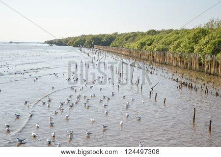 Seagull bird at Bang Pu beach Samut Prakarn Thailand