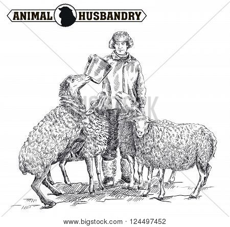 farmer feeding sheep. sketch made by hand on a white background