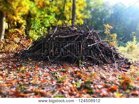 Pile brushwood in the forest in autumn.