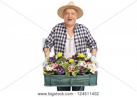 Elderly gardener holding a rack of flowers isolated on white background