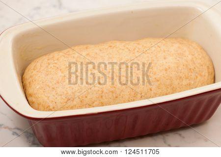 Hand Kneaded Dough For Spelt Bread Rising In Baking Sheet.