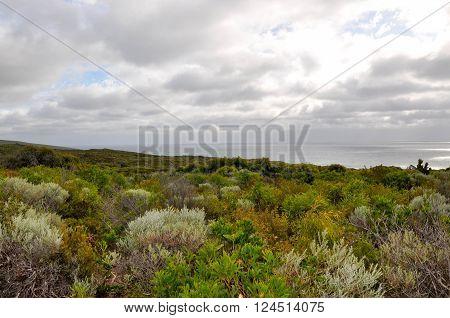 Green dune landscape on the headland of the Leeuwin-Naturaliste ridge with the Indian Ocean in Dunsborough, Western Australia under dark, stormy skies.
