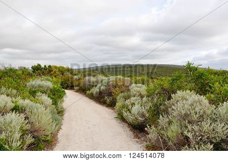 Hiking path through the green dunes landscape on the headland of the Leeuwin-Naturaliste ridge in Geographe Bay in Dunsborough, Western Australia under dark, stormy skies.