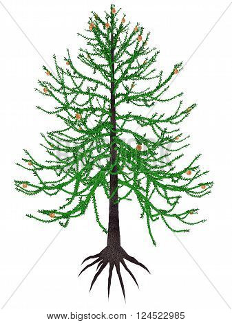 Araucaria prehistoric tree isolated in white background - 3D render