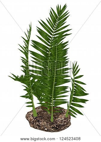Nipa burtinii prehistoric plant isolated in white background - 3D render