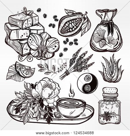 Hand drawn natural medicine. Organic herbs, cosmetics and healing set. Isolated illustration in vector. Organic plants, alternative medicine background. Natural holistic ingredients. Template.
