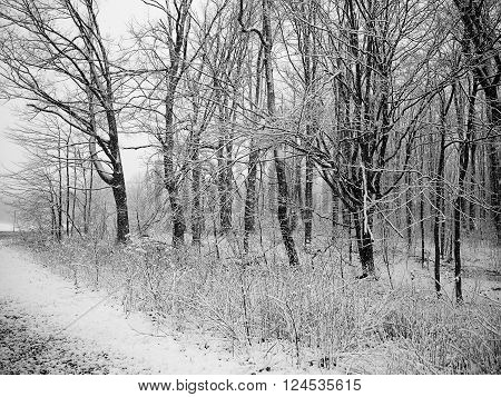 Snowy day in the forest on a spring day