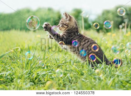 Kitten playing with soap bubbles on green field in summer side view