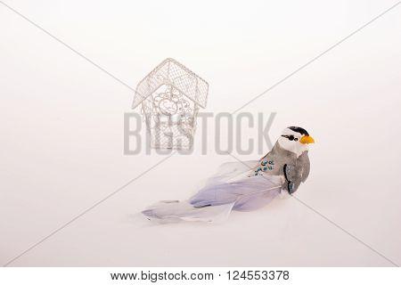 Bird near a red birdcage on a white background