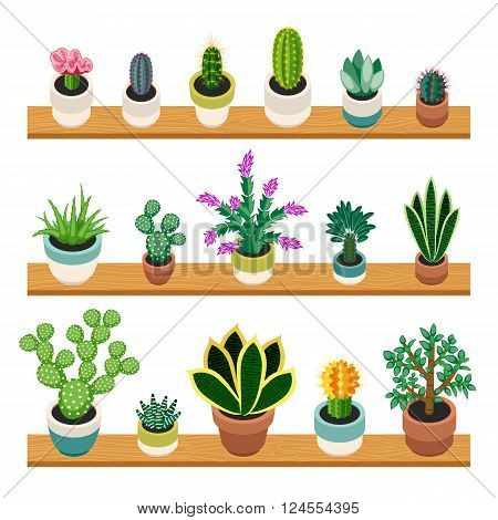 Set of cactuses and succulents in pots on a shelfs. Indoor plants on the shelves isolated on white background. Indoor plants in a flat style. Vector illustration.