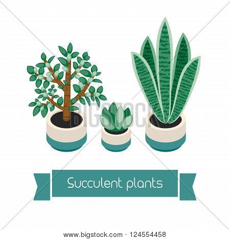 Succulents in pots. Succulents isolated on white background. Indoor plants in a flat style. Natural background with three succulents. Vector illustration.